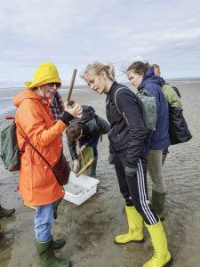 Elever ser på krabber på stranden