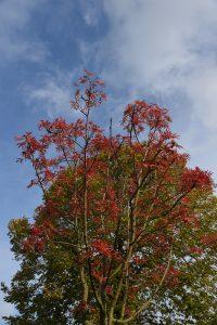 Træ og himmel